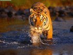 best tour operators india  - Wildlife
